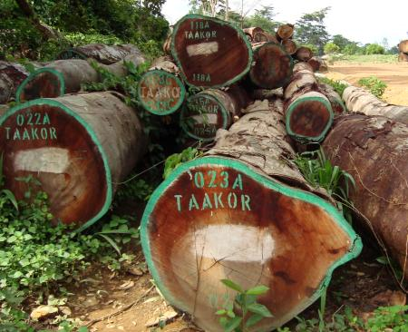 What is the link between this logging company operating in Sierra Leone and Vice President Sam Sumana?